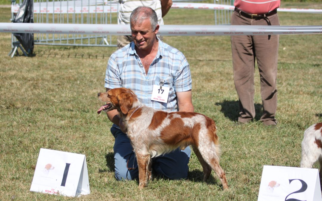 Horus de Tremouard Wins Open Male, Nationale D'Elevage France 2018