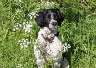 Lydie_in Sheep Parsley
